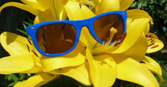 Immer mit Sonnenbrille