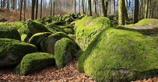 Wellness-Urlaub im Odenwald